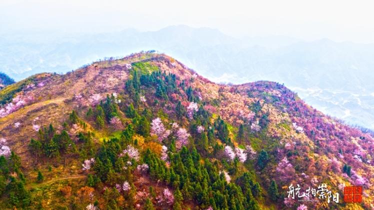 崇阳白崖山樱花盛开
